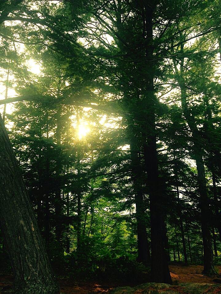 15 sunny trees